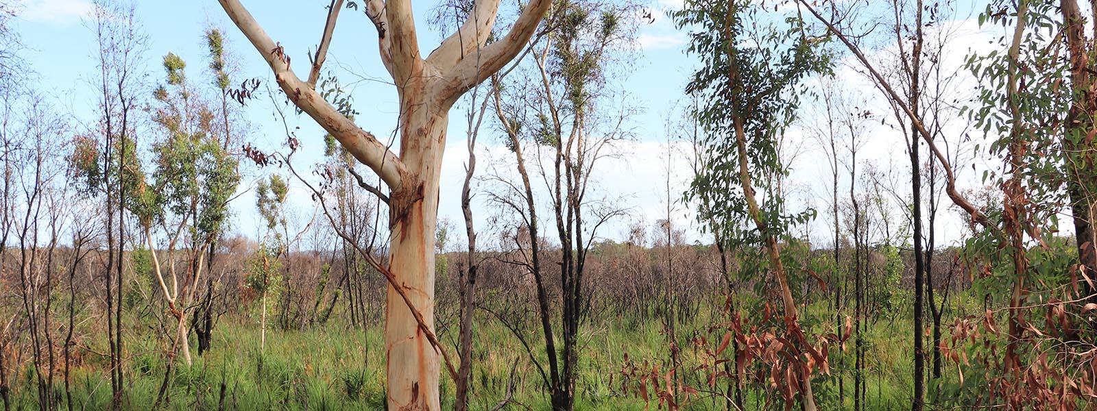 Image of greenery in Mambo wetlands