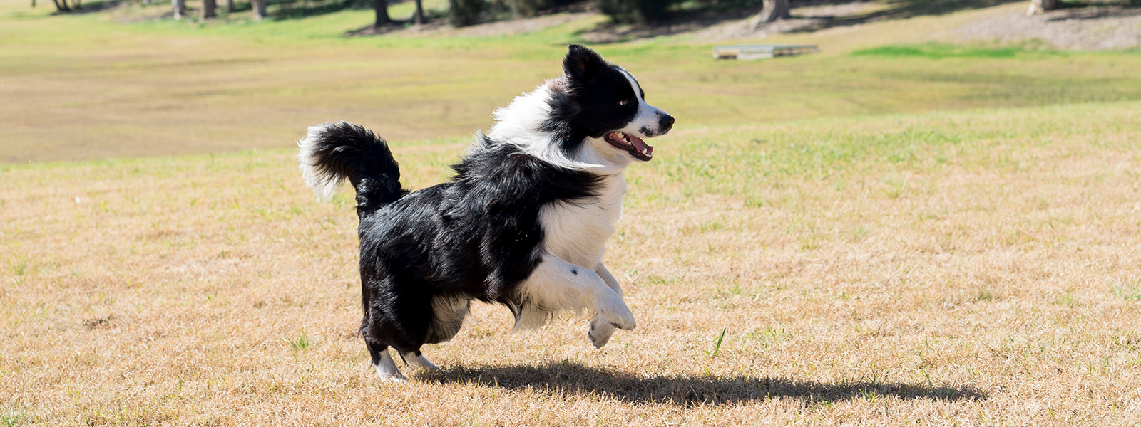 Image of a dog frolicking in the park