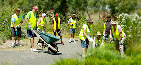 Corlette Parks Reserves and Landcare Volunteers