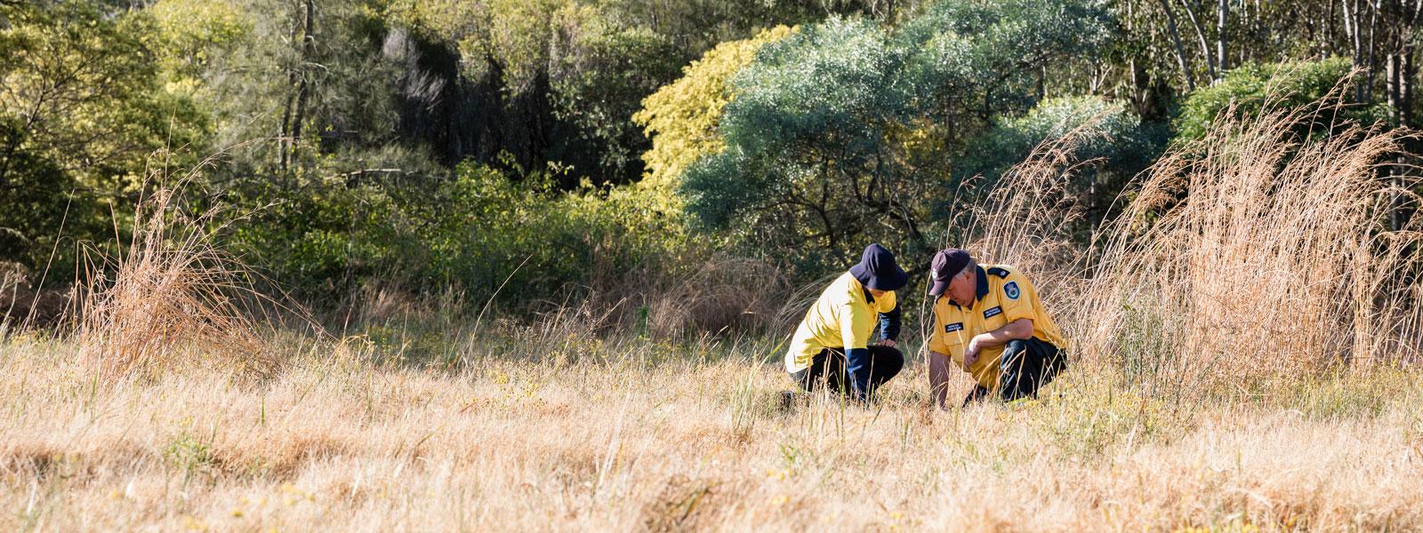Image of RFS officers looking in dry bush land