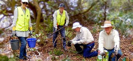 Nelson Bay Parkcare West volunteers, water bearer, Lorrence Salter, Peter Dundas Smith, John Wells and Peter Rees plant native shrubs