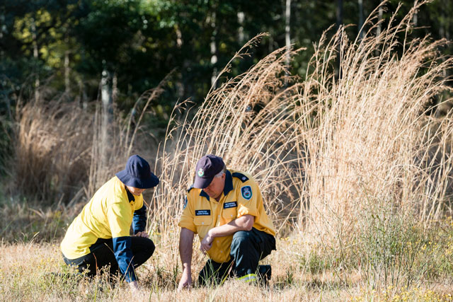 Council staff member and RFS officer inspecting ground surrounded by dry grass