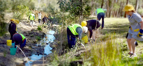 Medowie Tidy Towns and Medowie school students at Cole Close easement