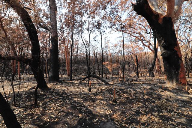 Tilligerry bushfire 2018 aftermath